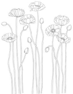 MDS_Downloads_022613_PleasantPoppies